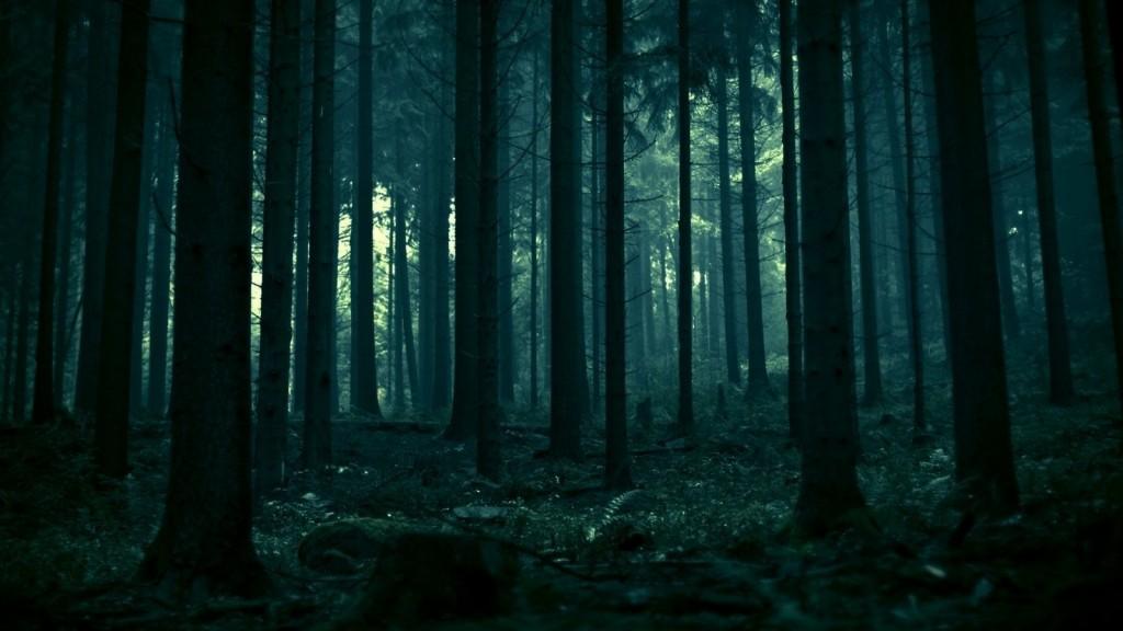 bosque-de-noche